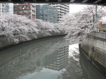 20080405t.jpg