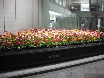20080415a.jpg