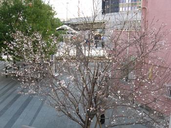 20090214b.jpg