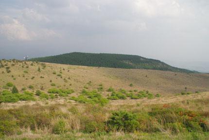 20090621d.jpg